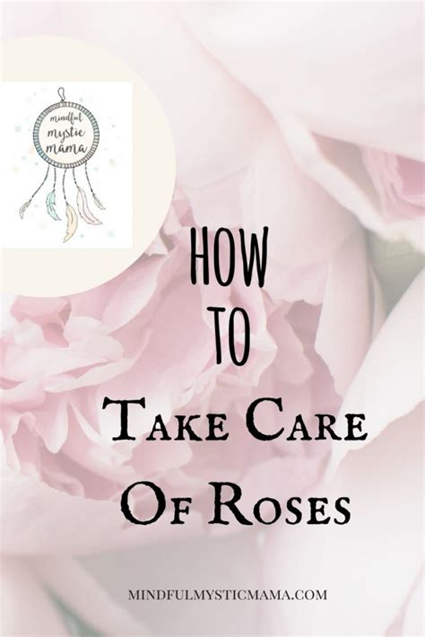 how to take care of roses mindful mystic mama