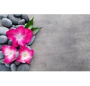 Wallpaper Flowers Stones Flower Orchid Spa