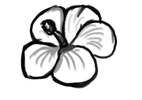Easy To Draw Flowers by Cool Easy Drawing Of A Flower Clipart Best
