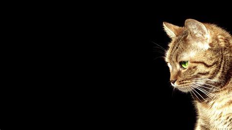 Wallpaper Tumblr Cat | cat wallpaper tumblr top wallpapers