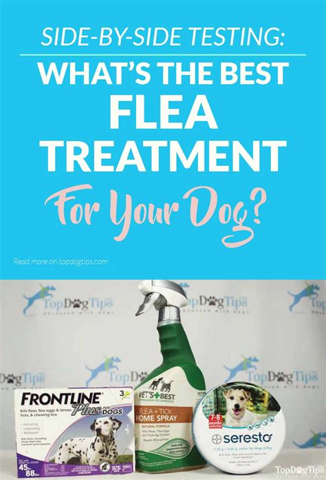 best flea and tick medicine for dogs 3 best flea and tick treatment for dogs review testing 2017