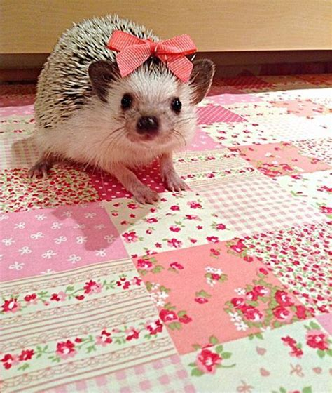 best bedding for hedgehogs 25 best images about only hedgehogs on pinterest