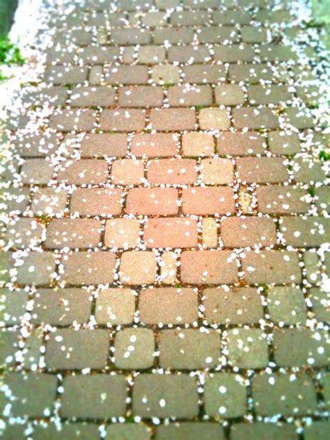 glitter wallpaper dumbarton road 320 best glitter sparkle shine images on pinterest