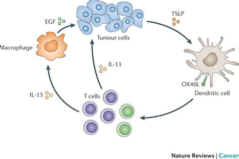 frontiers tumor altered dendritic cell figure 5 cancer immunotherapy via dendritic cells