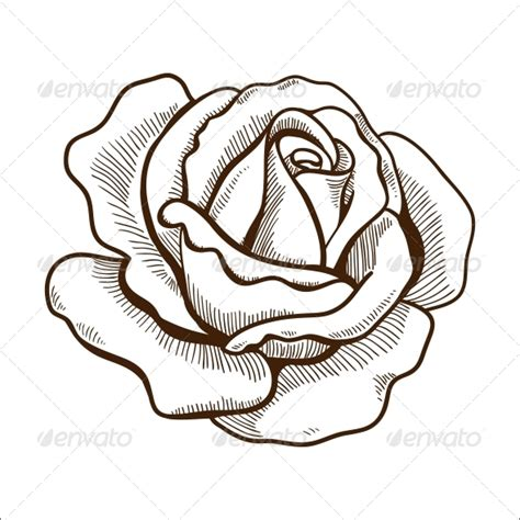 rose flower by chuhastock graphicriver