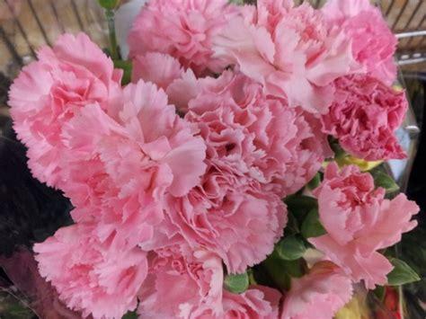 fiori garofani fiori commestibili lista e foto