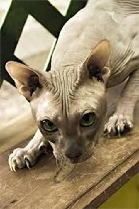 bold cat on pinterest