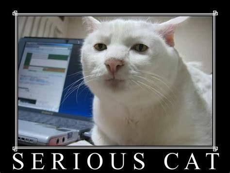 Cat Internet Meme - april fools wasn t that fun game usagi