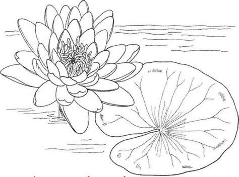 design bunga teratai 15 gambar sketsa bunga dari pensil yang mudah dibuat