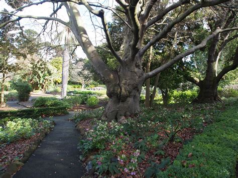 Geelong Botanical Gardens Geelong Botanic Gardens Melbourne