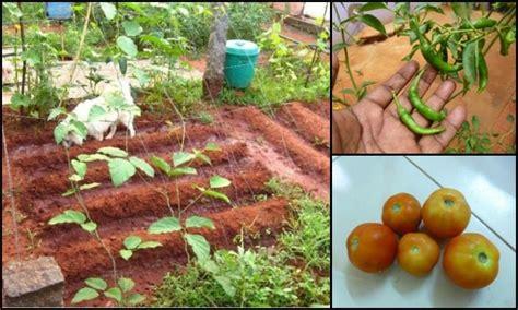 Kitchen Garden Organics Ltd How To Grow A Small Kitchen Garden In Your Backyard Diy