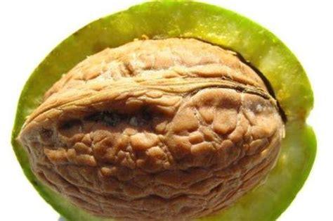 dieta alimentare per ipertiroidismo miele e noci per stimolare la tiroide e guarire da obesit 224