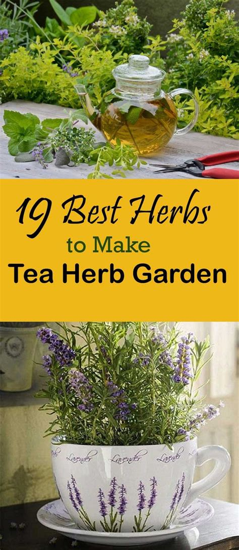 best herbs to grow indoors 25 best ideas about best herbs to grow on pinterest