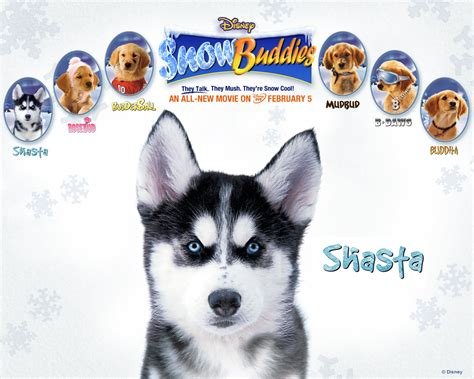 cast of snow dogs snow buddies images shasta wallpaper hd wallpaper and background photos 31198377