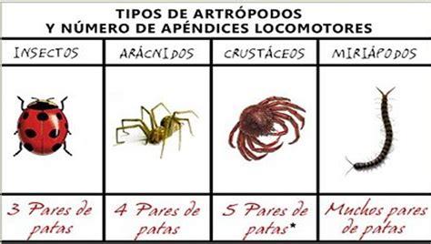 imagenes animales artropodos la clase de tercero del picasso animales invertebrados 1