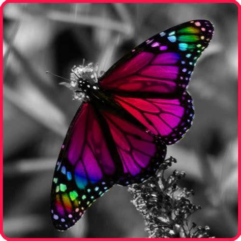 imagenes reales de amor fotos de mariposas de amor imagui