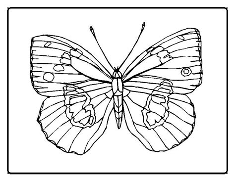 coloring page painted lady butterfly painted lady butterfly coloring page az coloring pages