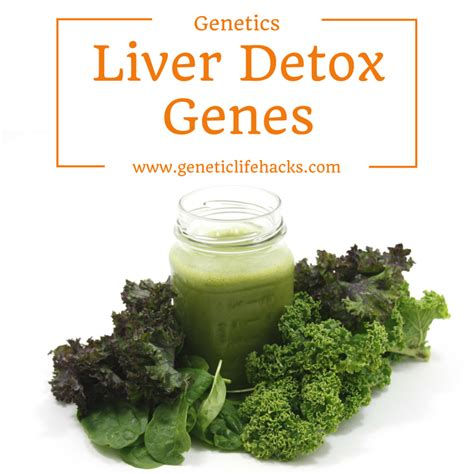 Detox Gene by Detoxification Phase I And Phase Ii Metabolism Is Genetic