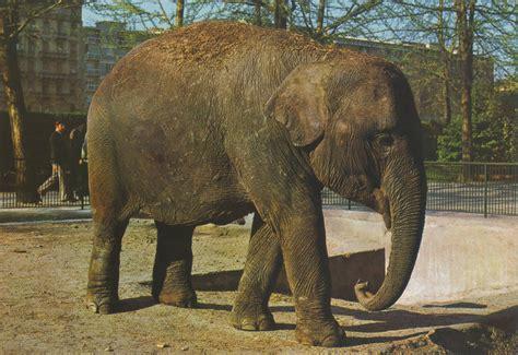 giardino zoologico torino les zoos dans le monde giardino zoologico di torino