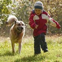 giochi di portare a spasso i cani chicco a passeggio con fido innovet