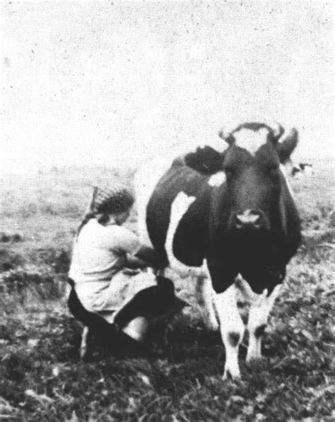 melkschemel einbeinig bild 252 bersicht fehntjer kurier jahrgang 1989