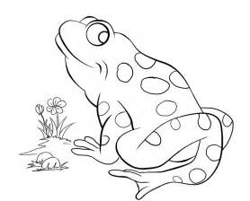Save the frogs colouring competition the lakes hub