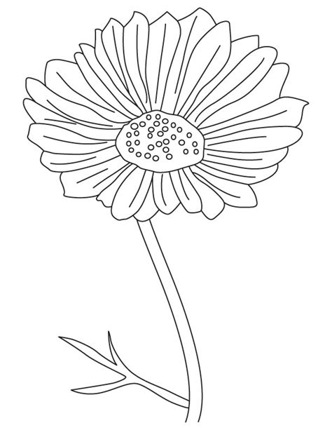 cosmos flower coloring page cosmos ornamental flower coloring page download free