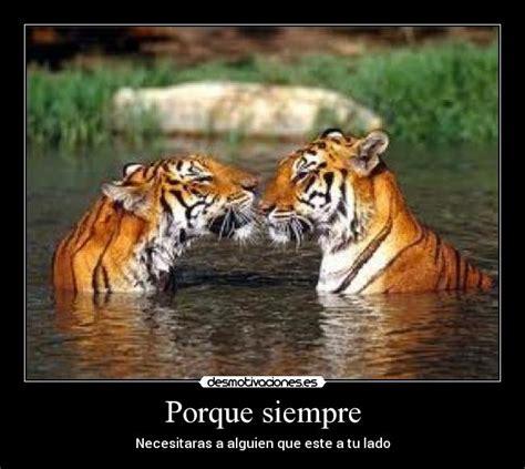 imagenes de leones romanticos im 225 genes y carteles de tigres pag 13 desmotivaciones