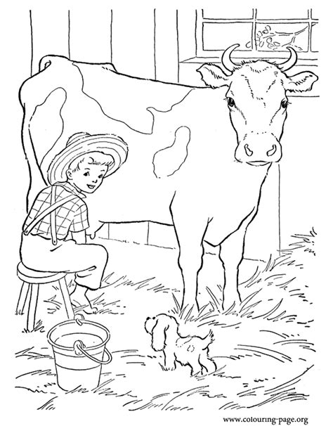 milking cow coloring page look the farm boy is milking a cow in the barn and his