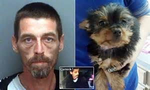 yorkie hacking cough florida dealer charged with stealing a 1 600 yorkie puppy and trading