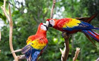 colorful parrots 2017 bird colorful parrot hd wallpapers