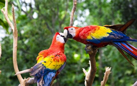 colorful birds wallpaper hd 55 cute love bird colorful parrot hd wallpapers download
