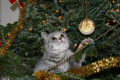 cat christmas tree repellent it s time is your tree ready with cats