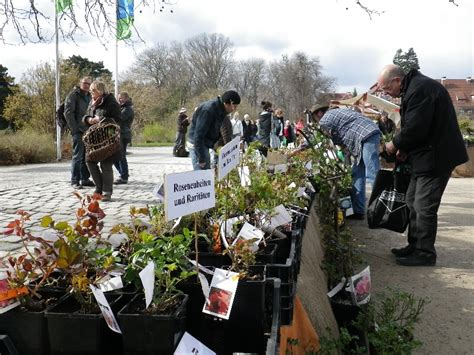 Staudenmarkt Im Botanischen Garten In Berlin Landlebenslust