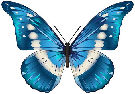 Cinderella Kupu free clip borders butterfly blue clipart best