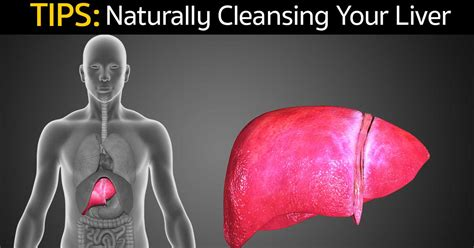How Often Can You Detox Your Liver by Tips For Naturally Cleansing Your Liver
