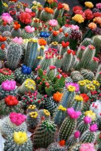 plants blooming blooming cactus junesteward s blog
