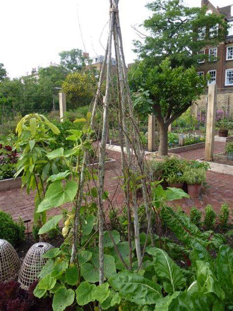 support for climbing plants the chelsea physic garden the enduring gardener