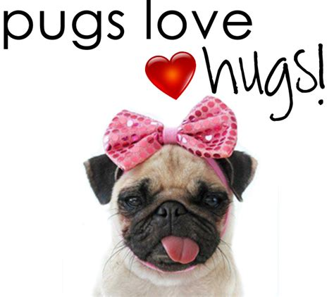 pug hug pinkloulou pugs hugs s day pug recap