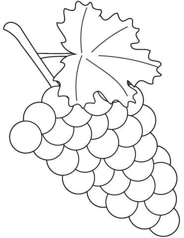 Grapes Coloring Pages To Print by Grapes Coloring Page Free Printable Coloring Pages