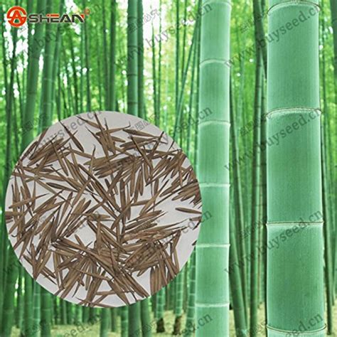 Planter Bag 5 Liter Hitam T1310 2 plants more than 1000 bamboo products