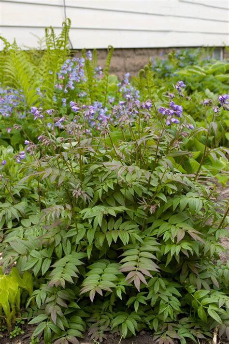 Perennial Flowers For Shade Gardens Hgtv Flowering Perennials For Shade Gardens