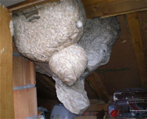 Beseitigung Wespennestern by Wespen Bek 228 Mpfen Vertreiben Beseitigen Und Entfernen