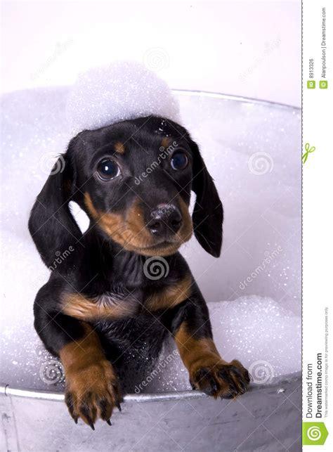 dog in a bathtub video dog in a bath 5 royalty free stock image image 8913326