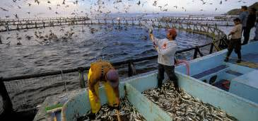 Home Based Design Jobs Philippines effects of aquaculture or fish farming on ocean health