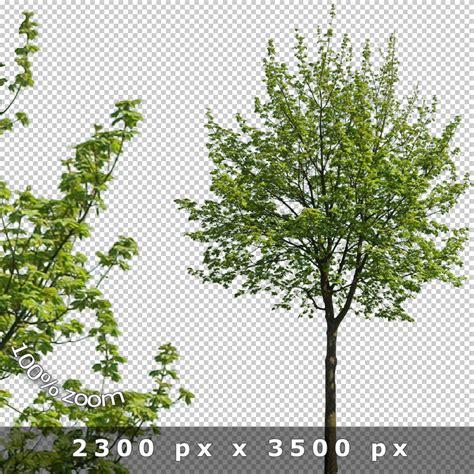 baum architektur cutout trees v02 architecture visualization