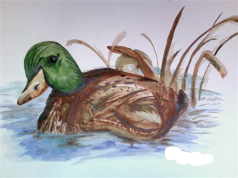 watercolor wood duck by manicmagician on deviantart watercolor duck by adelita98 on deviantart