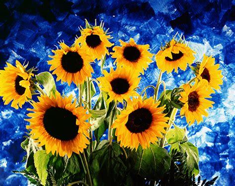 vaso di girasoli gogh analisi beautiful quadri con girasoli ideas harrop us harrop us