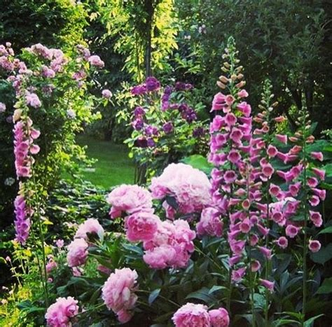 Pink Flower Garden Best 25 Pink Garden Ideas On