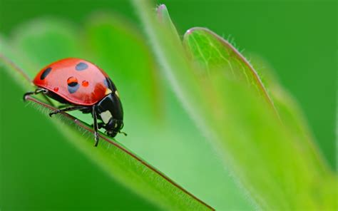 Bug Three | maritza craig bug movie wallpaper